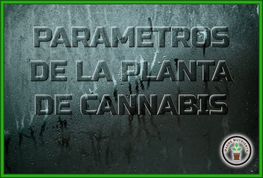 13 Parámetros que determinan la planta de Cannabis