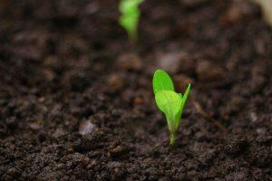 seedlings for planting 5325679 640