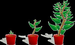 hydroponics nutrients Familiarizing